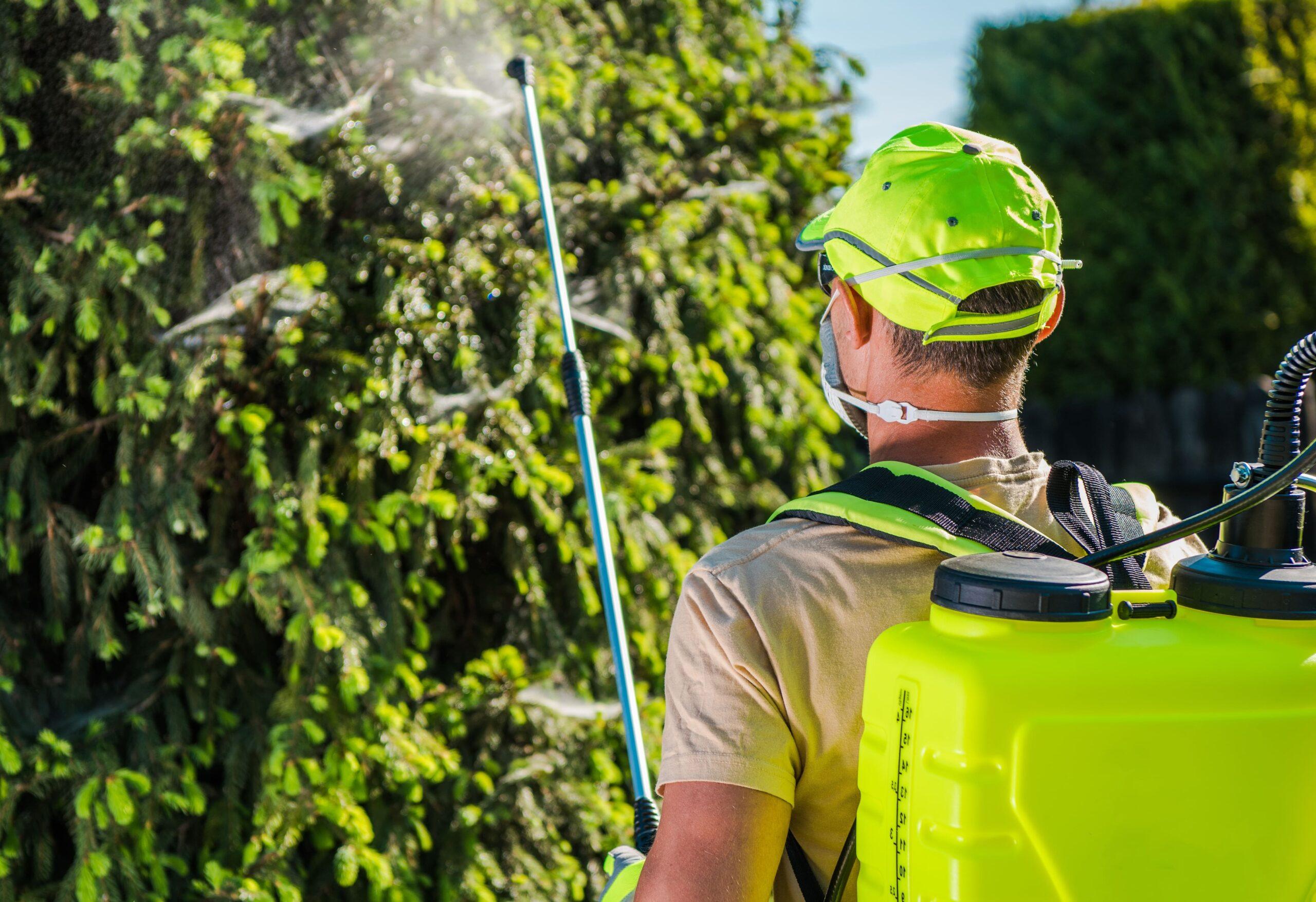 Tree Service Buffalo NY