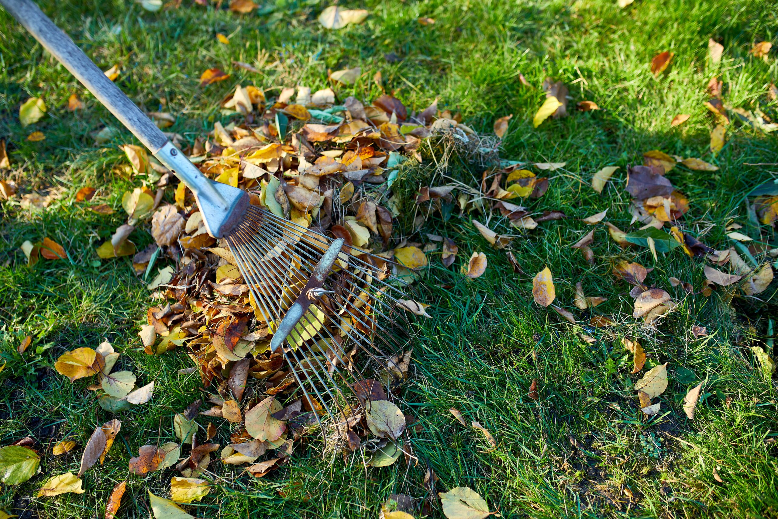 Spring and Fall Cleanup